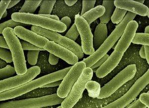 Bakteeri